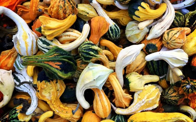 Arata Pumpkin Farm (Sundays In My City)