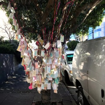 San Francisco Wishing Tree