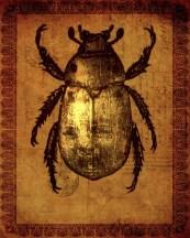Baby Beetle