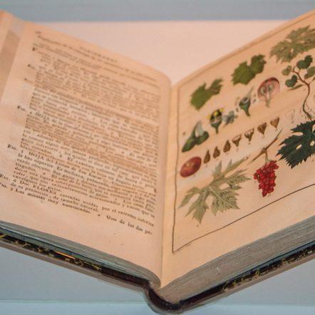 Liberación de Libros en El Real Jardín Botánico