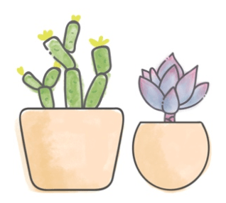 two succulents which is what you receive monthly in on these inexpensive subscription boxes