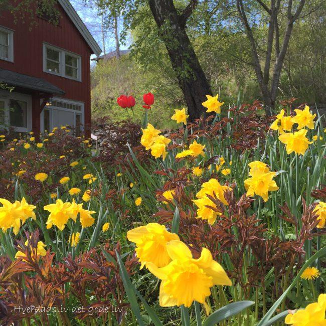 En hage som inspirerer – Staup
