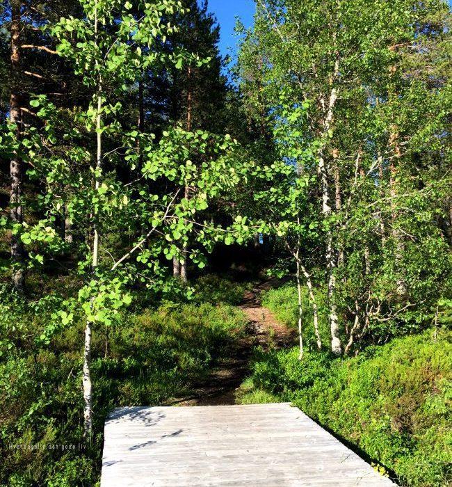 Vi tok av fra E6 og fikk en fantastisk naturopplevelse – Bølareinen
