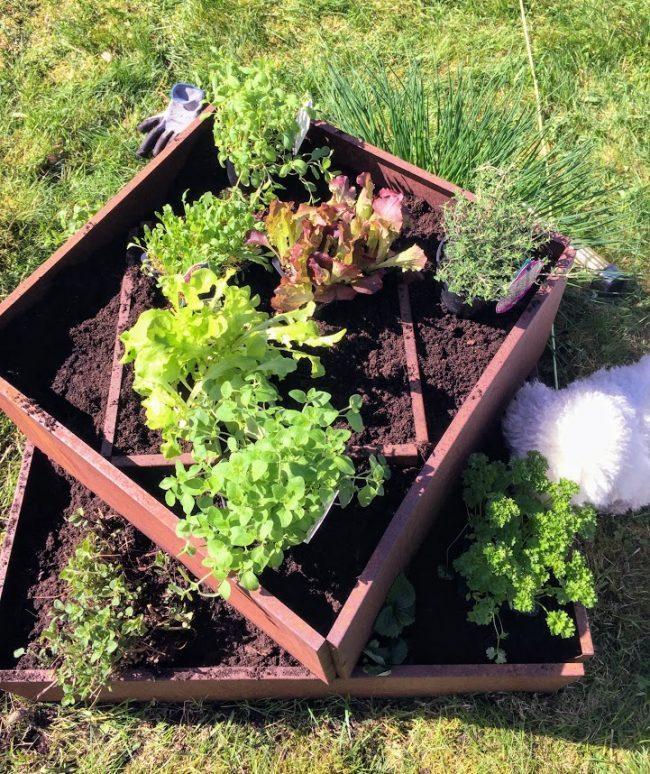 Krydderplanter og salat i en liten hage