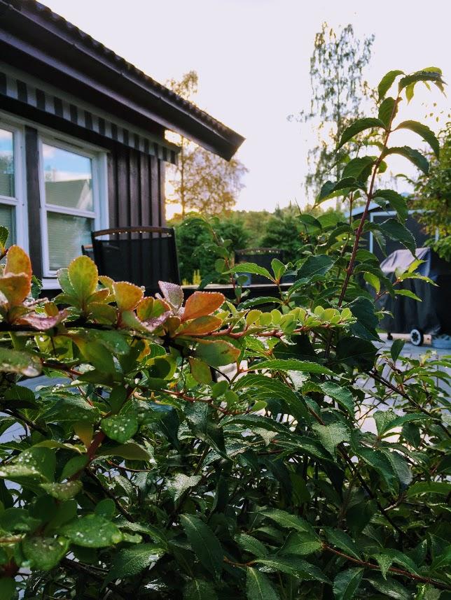 September - i en hage full av farger