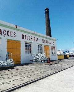 Pico - Bye bye Loukoum - Baleine - Açores