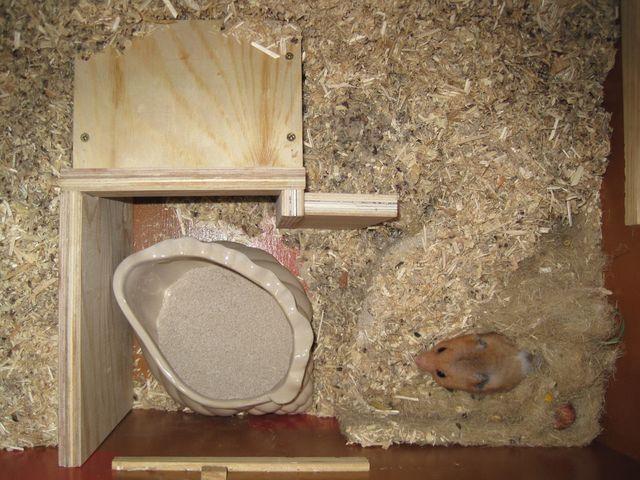 Wände für das Hamsternest
