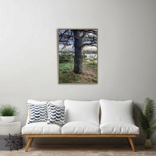 Oak view byFrank