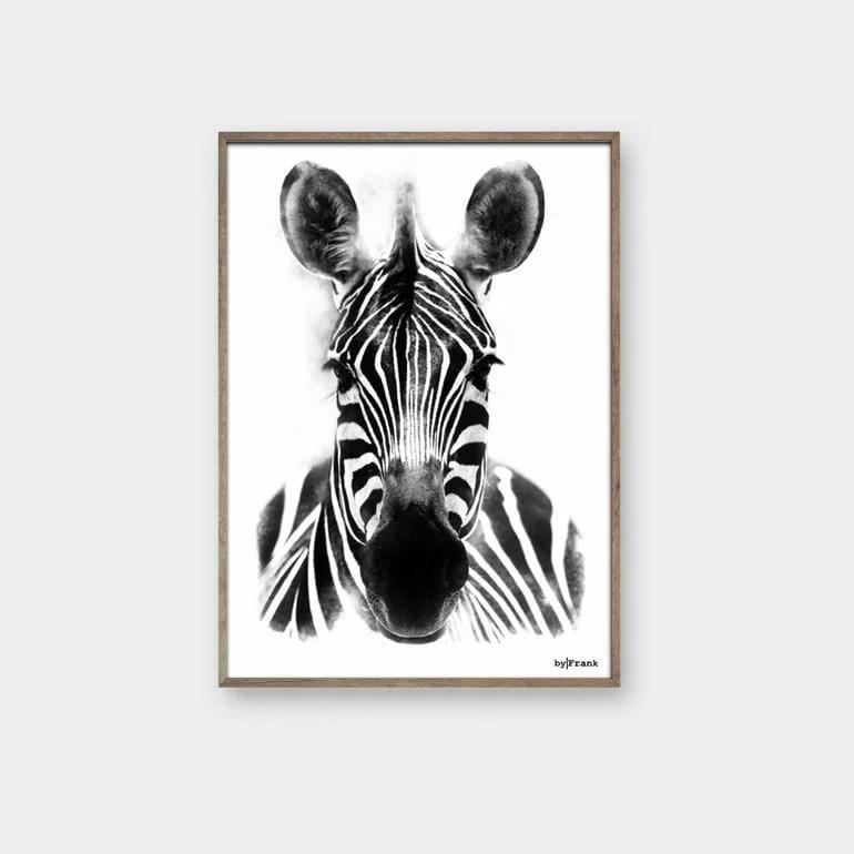 Zebra Plakat byFrank