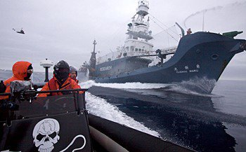 Extreme Eco Cruise: Volunteering with the Sea Shepherd
