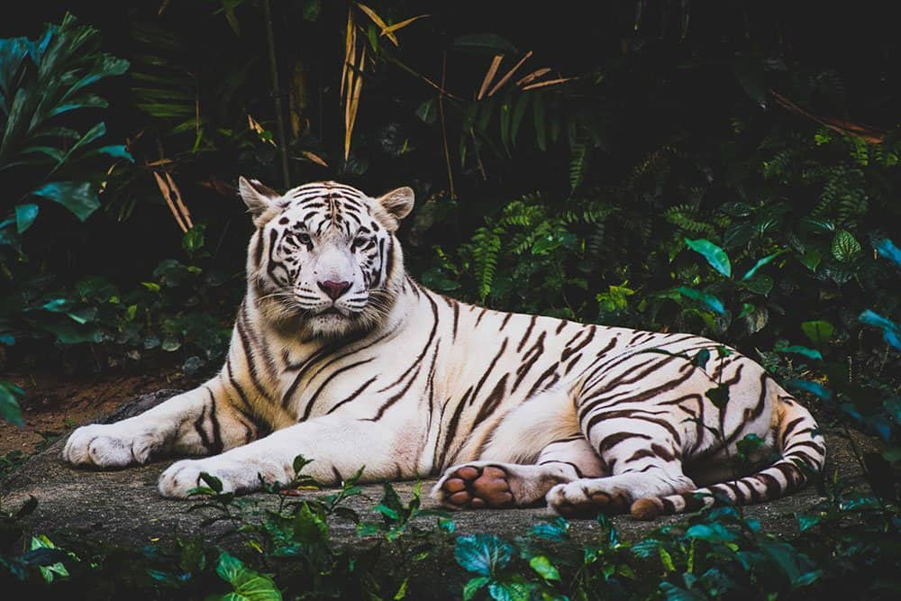 Animal Activities to Avoid When Traveling : These Common Attractions Harm Animals