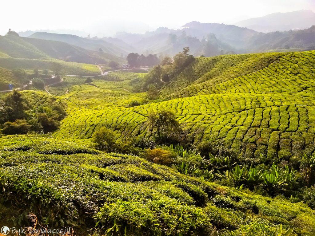 Pola herbaciane wmalezji