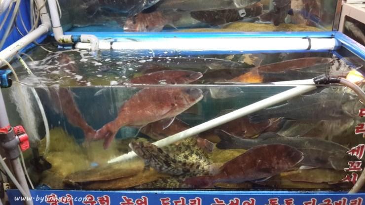 noryangjin_fish_market_06