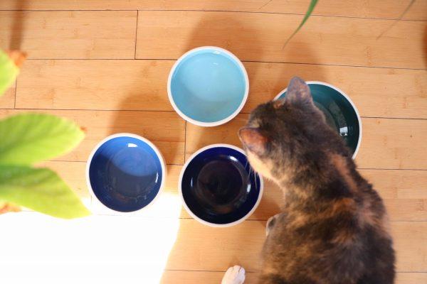 Gamelle pour chat ou chien en céramique coloré avec chat