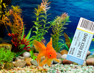 fish tanks concert tickets and bankruptcy