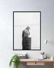 ins-bird-fugl