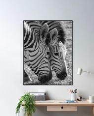 ins-zebra