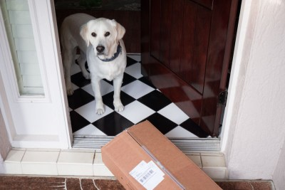 Buddy at front door with shipment