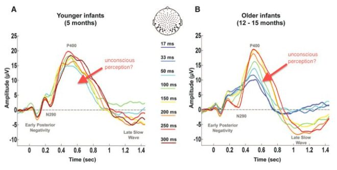 Figure 3 from Kauider et al 2013 showing electromagnetic response patterns of infants during perception tasks.