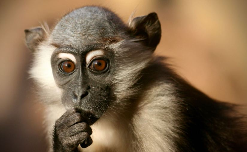 A thinking primate.