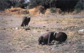 A vulture watches a child in South Sudan