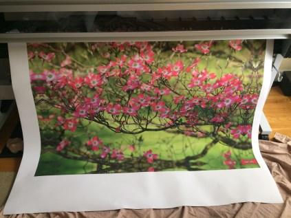 Pink Dogwood Canvas Printing