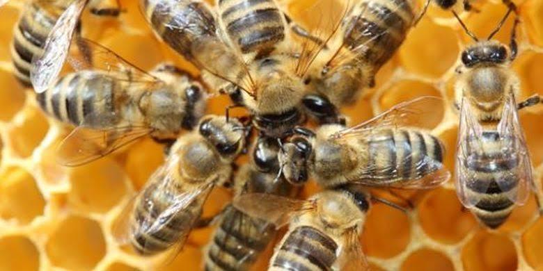 Arti Mimpi Disengat Lebah Tawon Menurut Primbon Jawa
