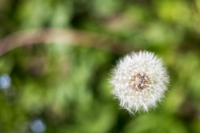 Sommer-blomster-BySunroad-web-2