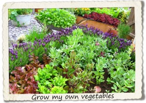 bucket list: grow my own vegetables