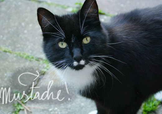 Neighbor cat with a mustache
