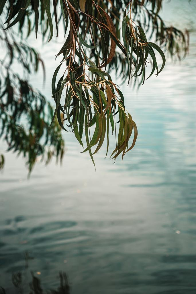 Willow tree and water symbolizing Sukkot - ByZipporah