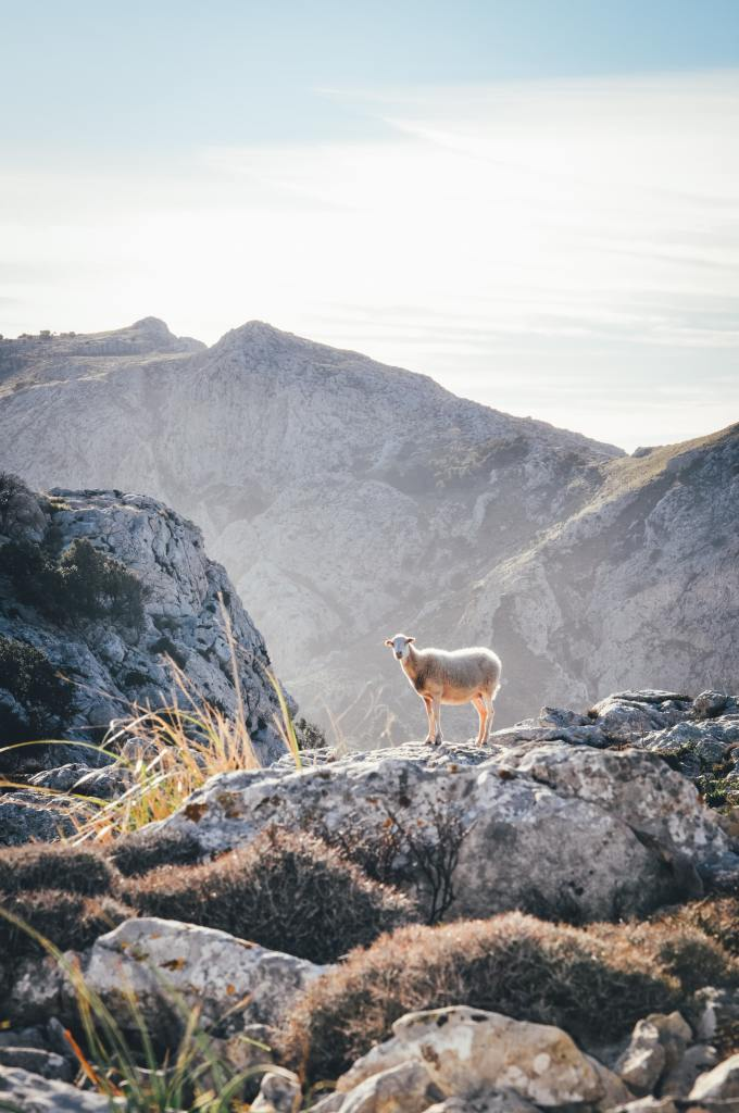 Goat on a rocky hill, a symbol of the Day of Atonement. - byZipporah Blog