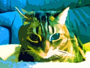 Striped-Tabby-Cat