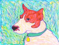 Jack Russell Terrier Drawing