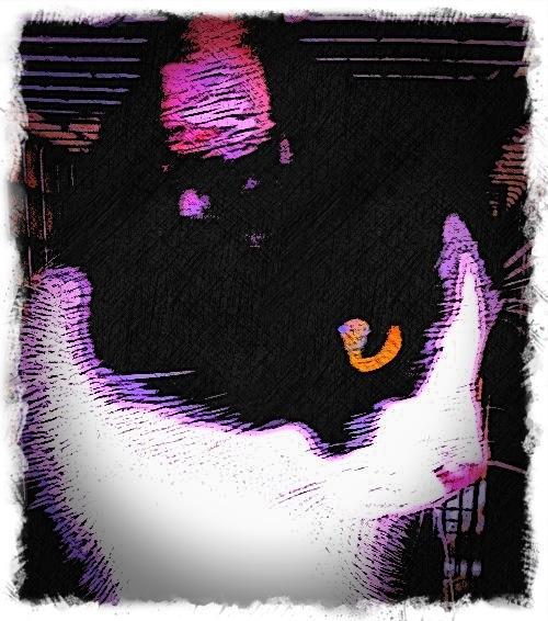 Black and White Cat - Custom Digital Fine Art Pet Portrait by Animal Artist BZTAT