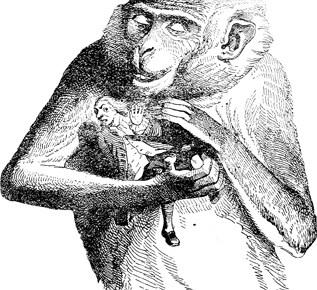 """Créature fantastiques : les """"humanimaux"""""""