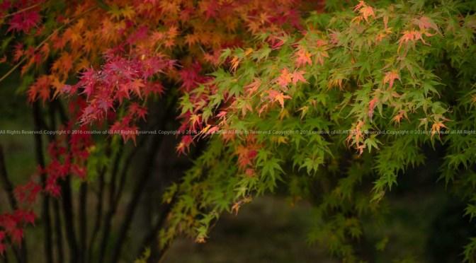期間限定公開の諸戸氏庭園を訪ねて。
