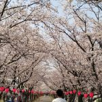 平成30年度 広島西圏域障がい者就労支援ネットワーク会議に参加しました。