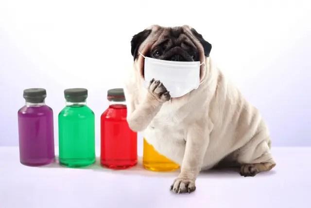 犬のマスク