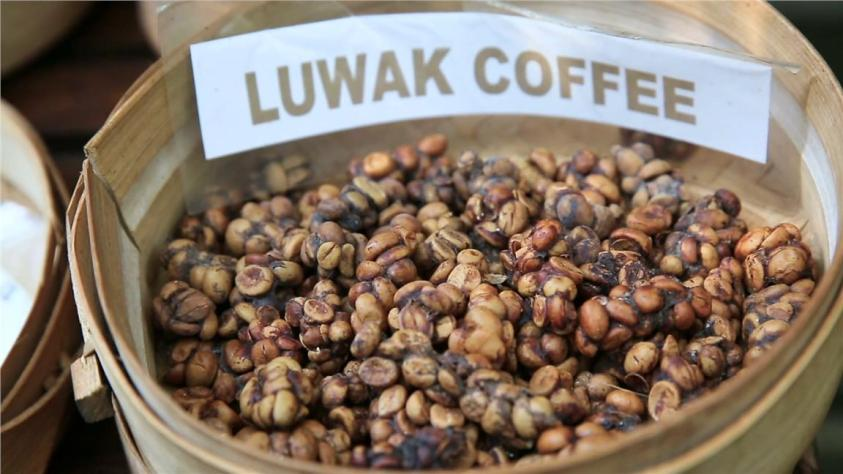 Kopi luwak, Bali | Ummi Goes Where?