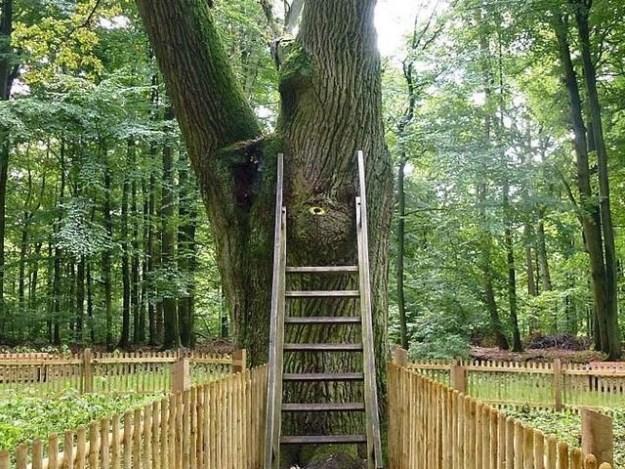 دنیا کا واحد درخت جسے 1927ء میں ڈاک کا پتا دیا گیا تھا۔ یہاں ہر سال ہزاروں افراد محبوب کی تلاش میں خط لکھتے ہیں، فوٹو: بشکریہ بی بی سی
