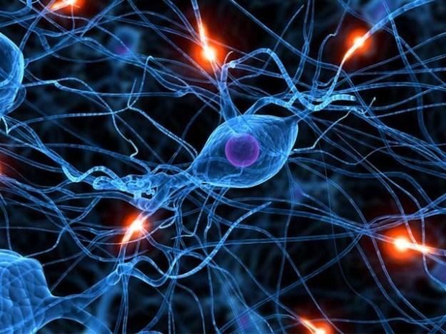 ماہرین نے ایک نیا انکشاف کیا ہے کہ بڑھاپے میں بھی انسانی دماغ نئے خلیات بناتا رہتا ہے۔ فوٹو: فائل