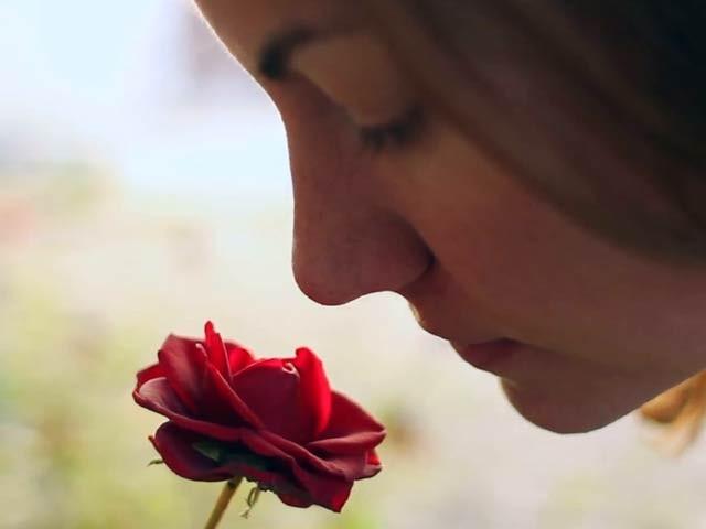 دورانِ نیند گلاب کی خوشبو بچوں کی یادداشت بڑھاسکتی ہے، تحقیق