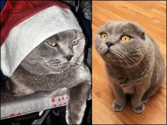اس بلی کا منظر جیسی مناظر کا اظہار بھی کرتا ہے ، وہ ضرور پوری ہوتا ہے۔ (فوٹو: انٹرنیٹ)