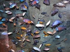 انسانی مداخلت سے دنیا کے نصف دریاؤں میں مچھلیوں کی انواع میں کمی
