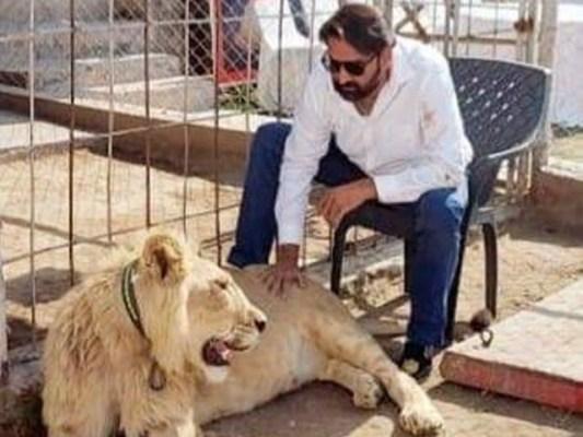 سید امداد حسین کو شیر ریلیوں میں لے جانے پر بھاری جرمانہ بھی ہوچکا ہے