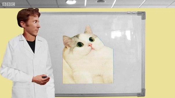 Eagleman mostrando la foto de un gato.