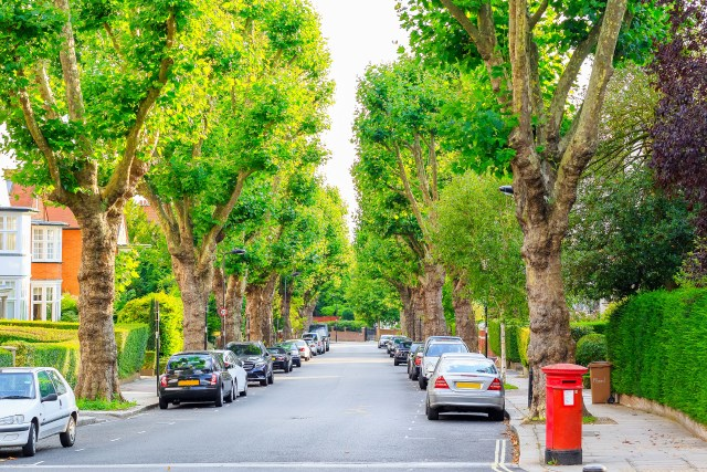 A photo of a tree-lined street in camden north London