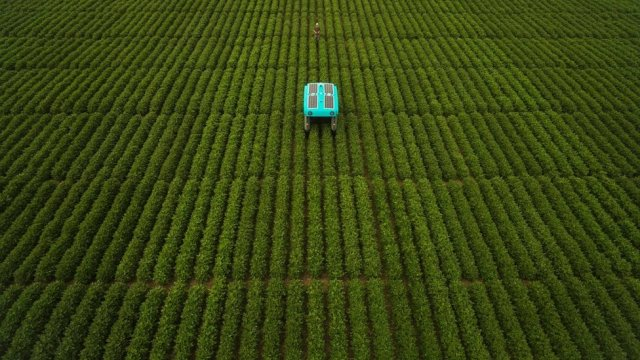 A modern version of the buggy rolls through a huge field of low-height green crops, stretching as far as the eye can see