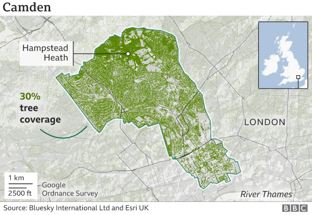 A graphic showing the tree cover in Camden in North London. Camden has 30% tree cover.